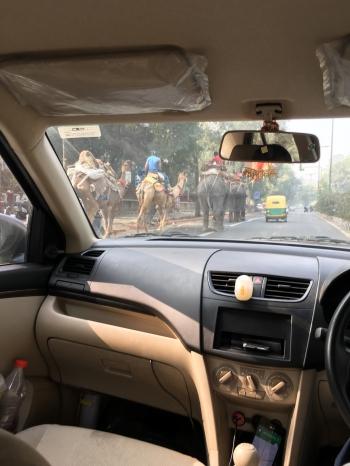 inde,delhi,voiture,éléphants,chameaux