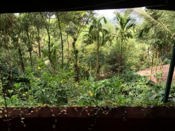 Inde,Kerala,Calicut,Kozhikode,Wayanad,Ayurveda,grassroots,Kalpetta,plantation de thé,escapade de Mumbai,zamzam,musulmans