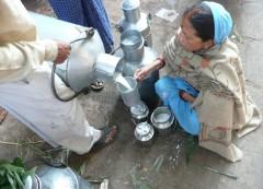 Inde,lait,vache,buffle,bufflonne,lait de vache,brique de lait