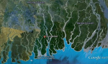 inde,west bengal,safari,tigre,mangrove