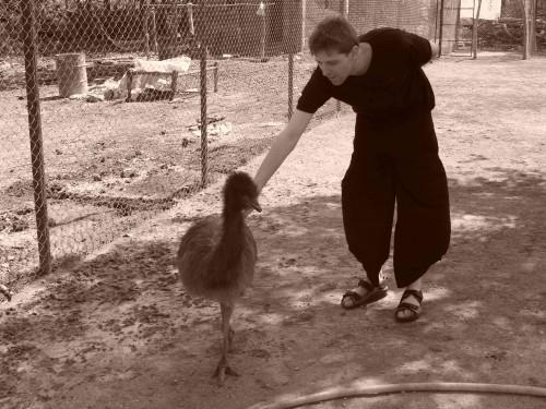 Emeu farming_1.jpg