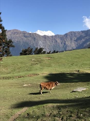 inde,uttarakhand,trek,trekking,randonnée,sari,rishikesh,deoriatal,tungnath,chopta