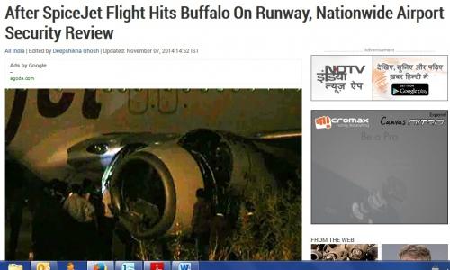 Plane hit cow.jpg