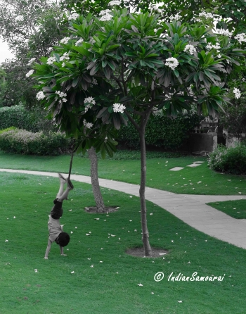 inde,mousson,pluie,loo,arbres indiens